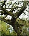 NO3901 : Nesting box by Bill Kasman