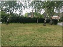 TQ2688 : Green by Vivian Way, Hampstead Garden Suburb by David Howard
