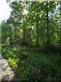 TF0820 : Sunshine and Trees by Bob Harvey