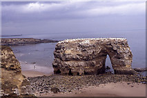 NZ4064 : Marsden Rock in 1990 before arch collapse by Colin Park