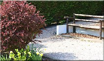 NO3901 : Spot the squirrel! by Bill Kasman