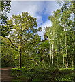 TF0820 : Woodland Panorama by Bob Harvey
