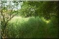SX8158 : Path, Sharpham Marsh by Derek Harper