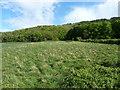 SJ6209 : 300m distance on the range by Richard Law