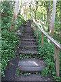 NZ3375 : Steps, Holywell Dene by Geoff Holland