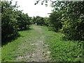 NZ3375 : Public Footpath near Holywell Dene by Geoff Holland