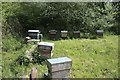 TF0820 : Behives in the Community Orchard by Bob Harvey