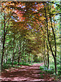 SK6273 : Copper Beech Avenue by Andy Stephenson