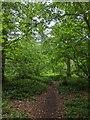 TF0820 : Informal path by Bob Harvey