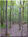 TQ5786 : Interior of Woodland near Thames Chase Forest Centre (Broadfields) by Roger Jones
