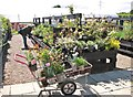 TG3002 : Green Pastures plant centre - first day of opening after lockdown by Evelyn Simak