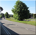 ST3091 : Tree in the middle of Malpas Road, Newport by Jaggery