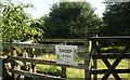 SX7151 : Sheep in field, Blackdown Rings by Derek Harper