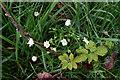 H4772 : Wild plants, Mullaghmore by Kenneth  Allen