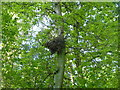 TF0820 : Abandoned nest by Bob Harvey
