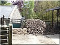 NY9549 : Large stock of fodder root crop at Newbiggin Farm by Oliver Dixon