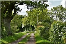 TM2768 : Brundish: Bridle track by Michael Garlick