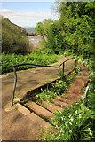 SX9364 : Path to Anstey's Cove by Derek Harper