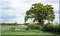 NZ2120 : Lone tree along hedge line by Trevor Littlewood