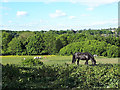 SE2536 : Horses in a field below Leeds and Bradford Road by Stephen Craven
