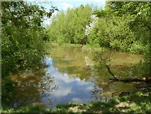 SK6736 : Pond near Foss Bridge by Alan Murray-Rust