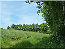 TR2954 : Small field near Heronden by Robin Webster