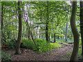 TL5100 : Knightsland Wood, Stanford Rivers by Roger Jones