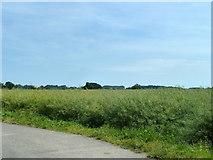 TR2856 : Field of oil seed rape by Robin Webster