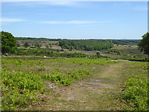 TQ4528 : View south-east over Ashdown Forest by Robin Webster