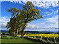 NH6455 : Boundary trees near Balnakyle by Julian Paren