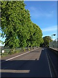 SX9392 : Evening sunlight on trees, Victoria Park Road, Exeter by David Smith