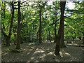 SE2539 : Path through Ireland Wood by Stephen Craven