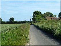 TR3354 : Lane from Ham towards Finglesham by Robin Webster