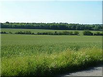 TR3252 : Wheat fields, Little Betteshanger by Robin Webster