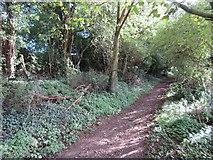 SU5646 : Footpath leaving North Waltham by Sandy B