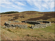 NY8753 : Sheepfold below Washpool Hill (3) by Mike Quinn