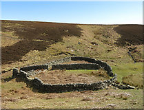 NY8753 : Sheepfold below Washpool Hill (4) by Mike Quinn