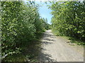 SE3725 : Public footpath on the north side of Cringlesworth by Christine Johnstone