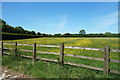 SP5816 : Buttercup Meadow with Stripes by Des Blenkinsopp