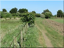 NZ3374 : Public Footpath near Brier Dene Farm by Geoff Holland