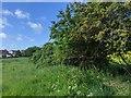 TF0820 : Old hedge line  by Bob Harvey