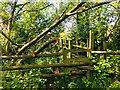 SJ7251 : Wooded Bridge by Scott Robinson