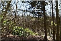 TQ6042 : Robingate Wood by N Chadwick