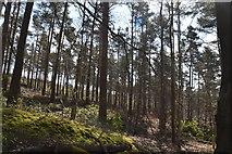 TQ6142 : Robingate Wood by N Chadwick
