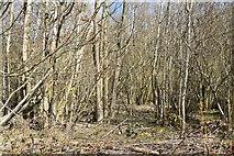 TQ6043 : Well Wood by N Chadwick