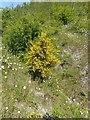 SK6143 : Gedling Country Park Wildlife – 5 by Alan Murray-Rust