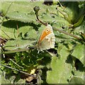 SK6143 : Gedling Country Park Wildlife – 10 by Alan Murray-Rust