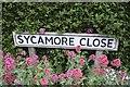 TF0820 : Sycamore Close by Bob Harvey