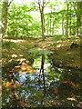 SU9586 : Last water in stream, Egypt Woods by David Hawgood