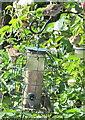 TQ2081 : Fledgling sparrows, North Acton by David Hawgood